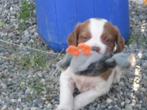 Murphy, Sarah's puppy