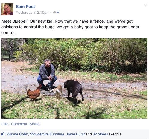 April Fools Goat